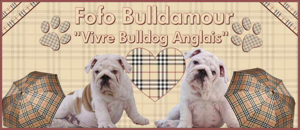 FORUM BULLDOG : Vivre Bulldog Anglais