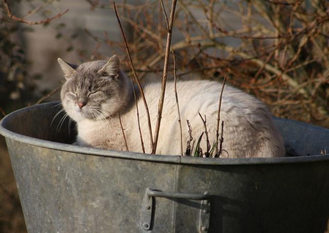 Gros Loulou chat de la fille de Brigitte