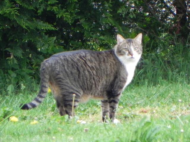 Théo, chat de Brigitte