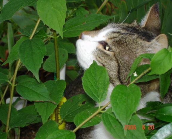Théo chat de Brigitte