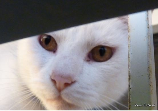 Yahoo chat chez Brigitte