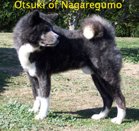 Otsuki