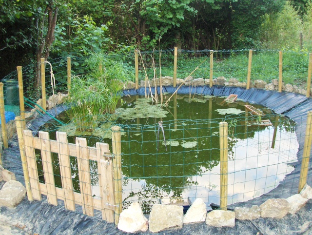 Pin bassin pour tortues aquatiques on pinterest - Bassin tortue floride strasbourg ...