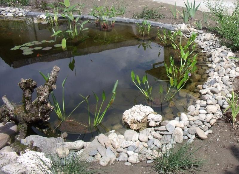 Construction d 39 un bassin de 16000l for Achat de gravier pour jardin