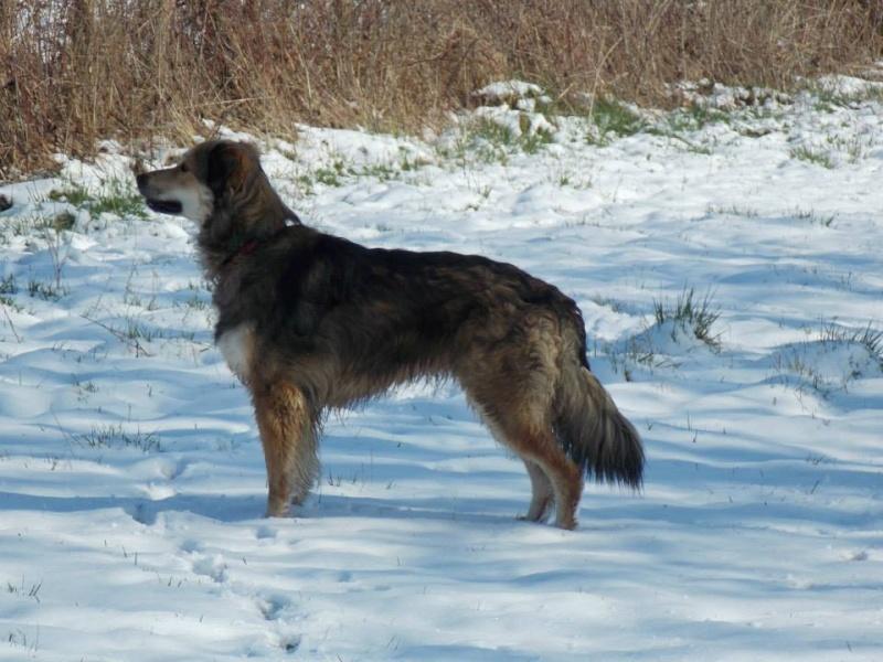 Balade avec chiens dans l'Eure et Loir (28)