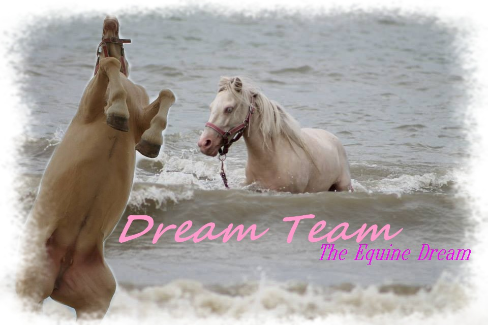 Dream--Team
