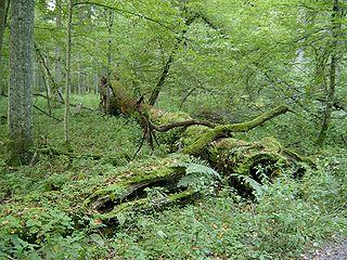 Au secours des forêts primaires dans Nouvelle conscience 320px-10