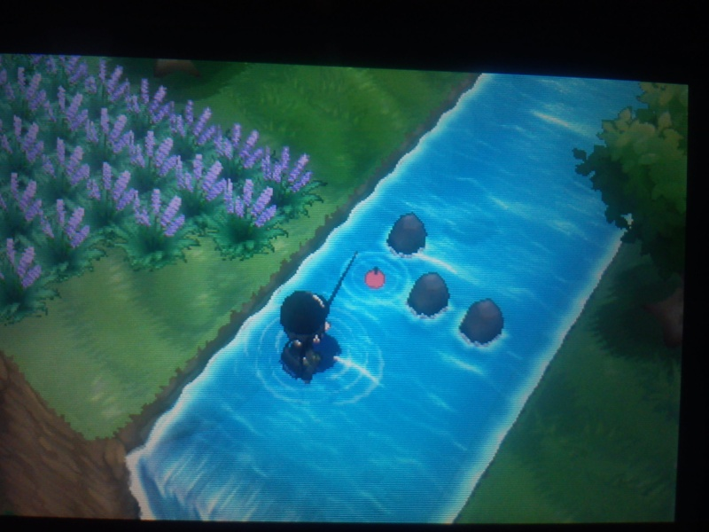 pokemon y comment avoir dracolosse