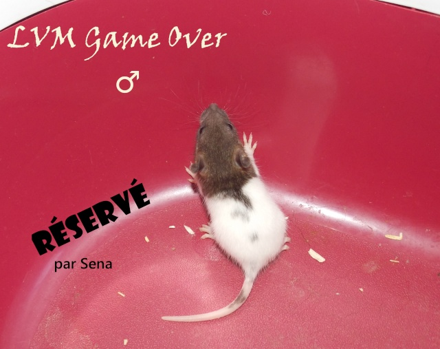 game_o11.jpg