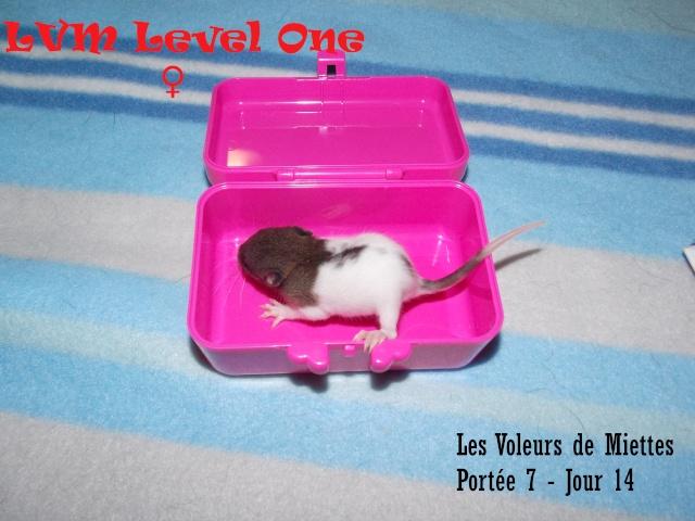 level_10.jpg