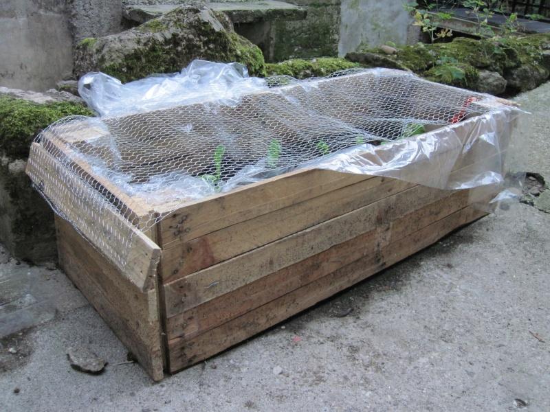Potager carr avec des palettes bois jardin pinterest for Carre de jardin en bois