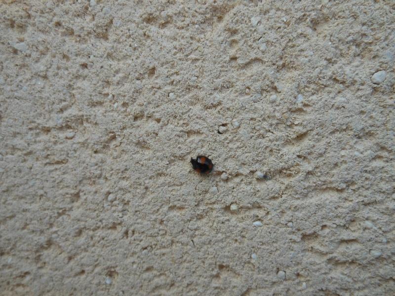 Un h tel pour les insectes cabane insectes page 2 for Hotel a insecte coccinelle
