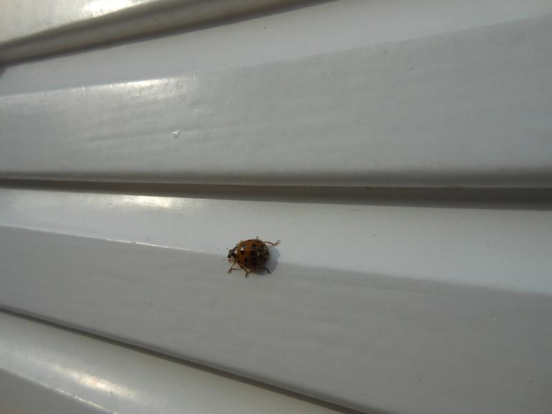 Un h tel pour les insectes cabane insectes page 2 - Cabane a insecte ...