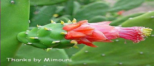 Mimouni ميموني