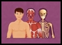 Le corps humain.