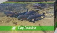 Carp-Invitation