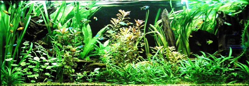 Aquarium communautaire aquatlantis plan large