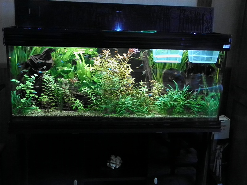 bac biotope amazonien