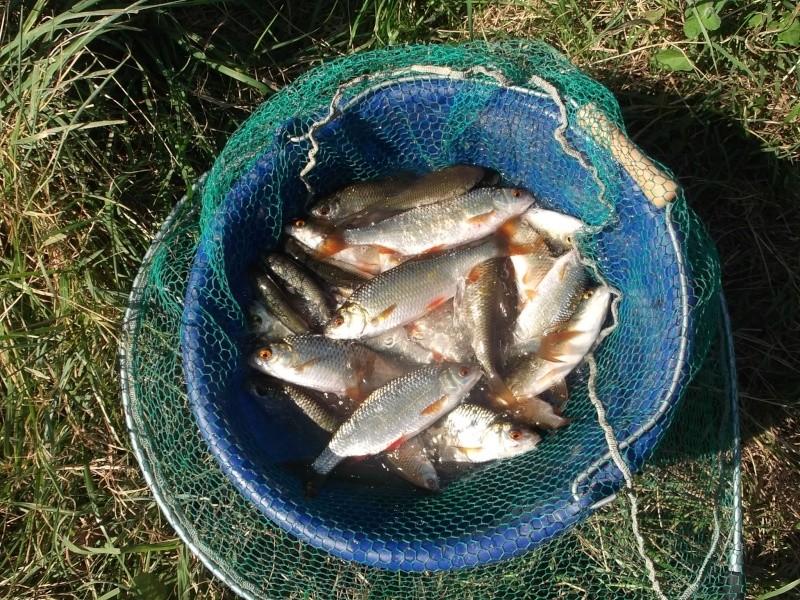 La pêche russe 3 comme gagner de largent au débutant