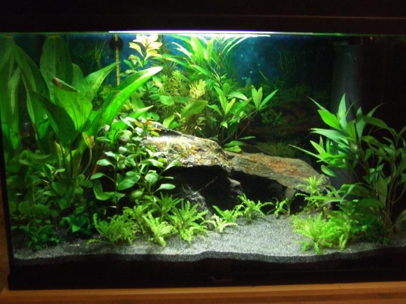 Une belle plante pour mon aquarium for Plante pour aquarium