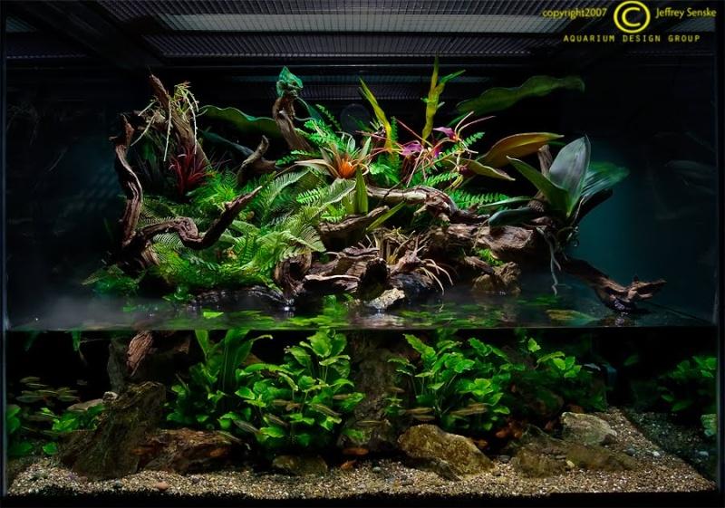 Projet for Aquarium ouvert