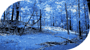 Finnek Forest