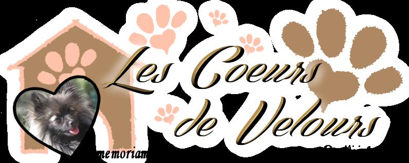 Les Coeurs de Velours | Protection Animale près d'Alès