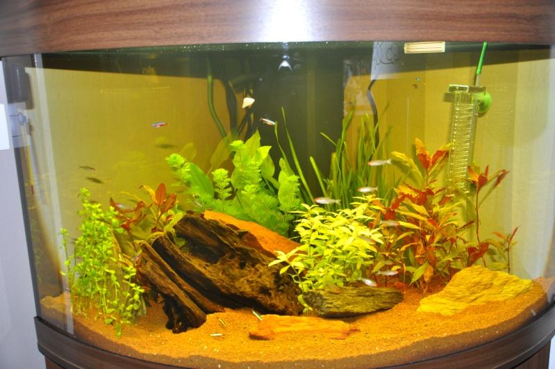 d 233 coration aquarium promo jardiland bordeaux 31 aquarium eau de mer a vendre aquarium eau