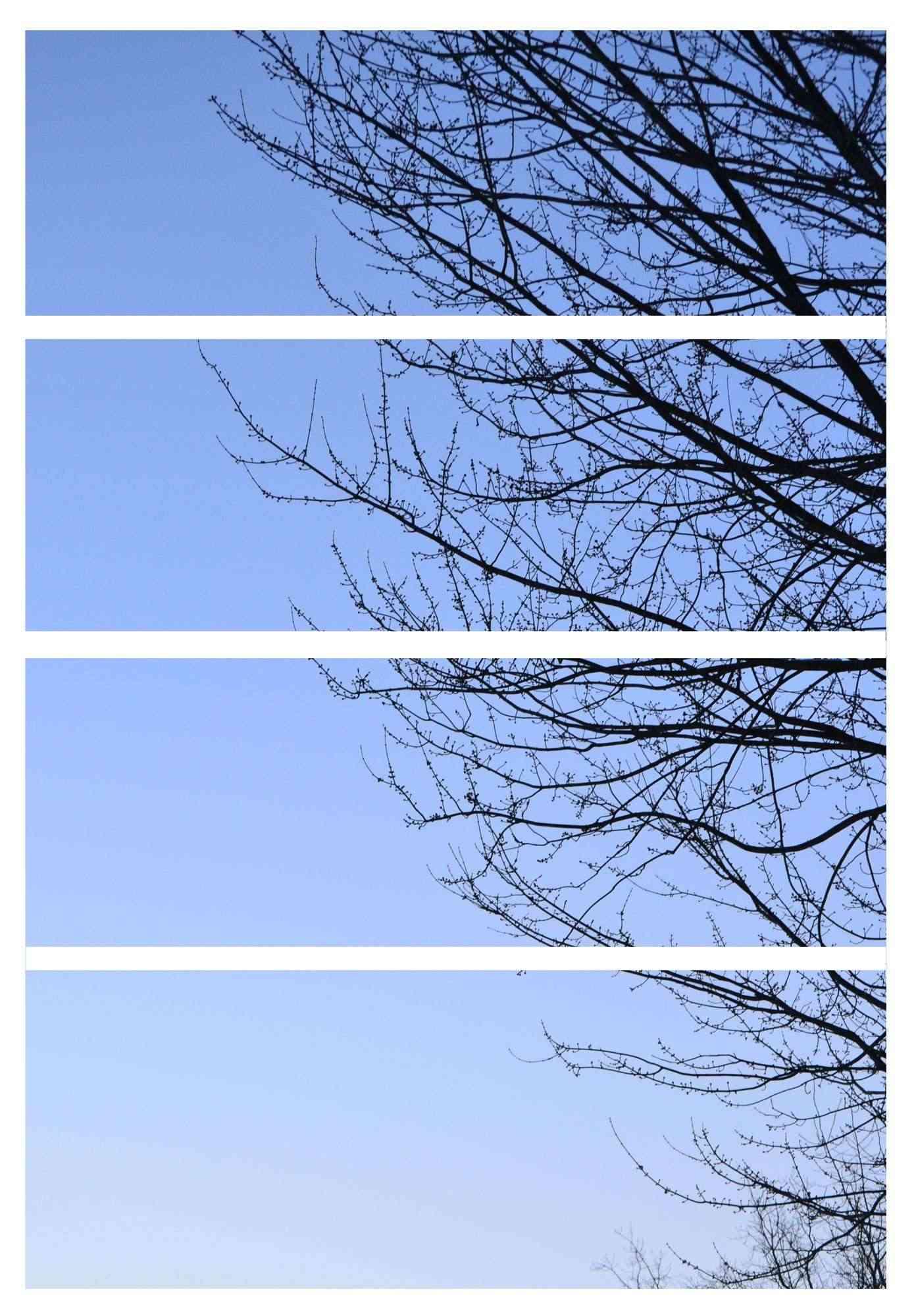 tree-210.jpg