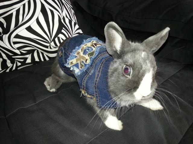 Vous avez également le choix entre un t-shirts, un manteaux, vestes et jaquettes et un chandail & vetement du sport animaux de vêtements pour lapins, des chiens, des petits animaux et des chats animaux de vêtements pour lapins Il existe fournisseurs de animaux de vêtements pour lapins principalement situés en East Asia.