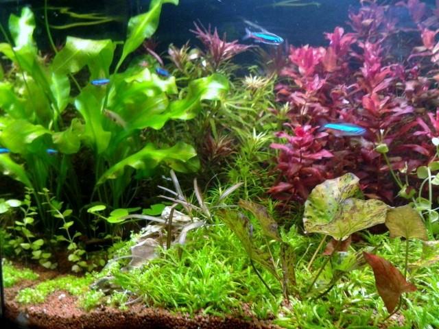 aquarium 54litres plant page 2. Black Bedroom Furniture Sets. Home Design Ideas