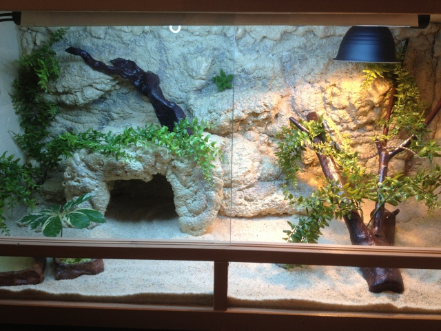 Fabrication et terrarium final - Decor de fond terrarium desertique ...
