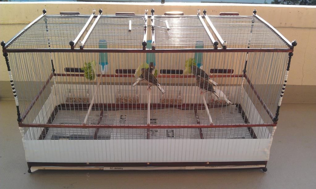 grande cage fabrication artisanale. Black Bedroom Furniture Sets. Home Design Ideas