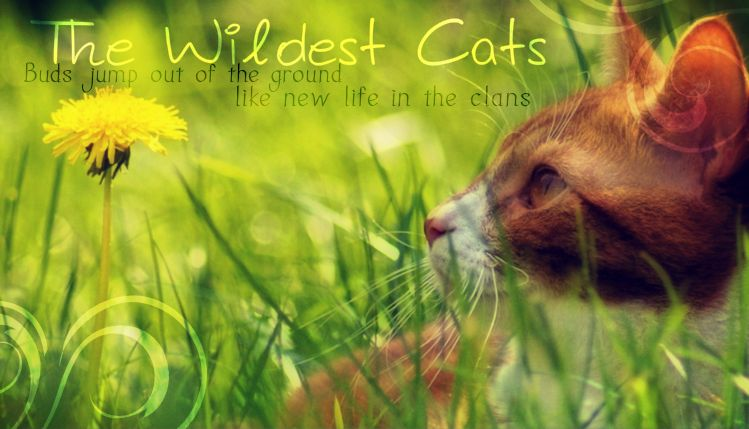 The Wild Warrior Cats