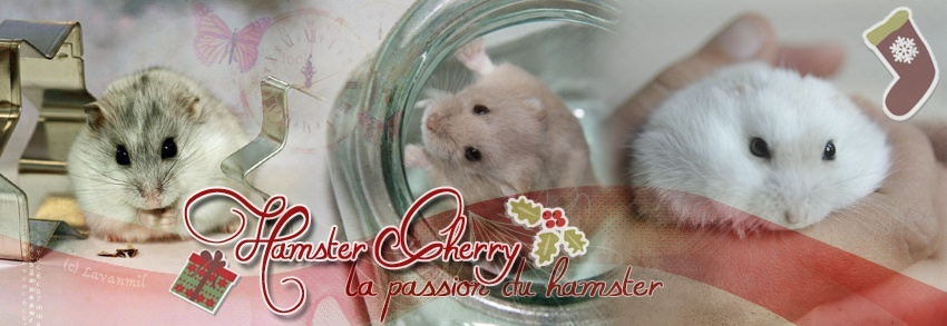 HamsterCherry