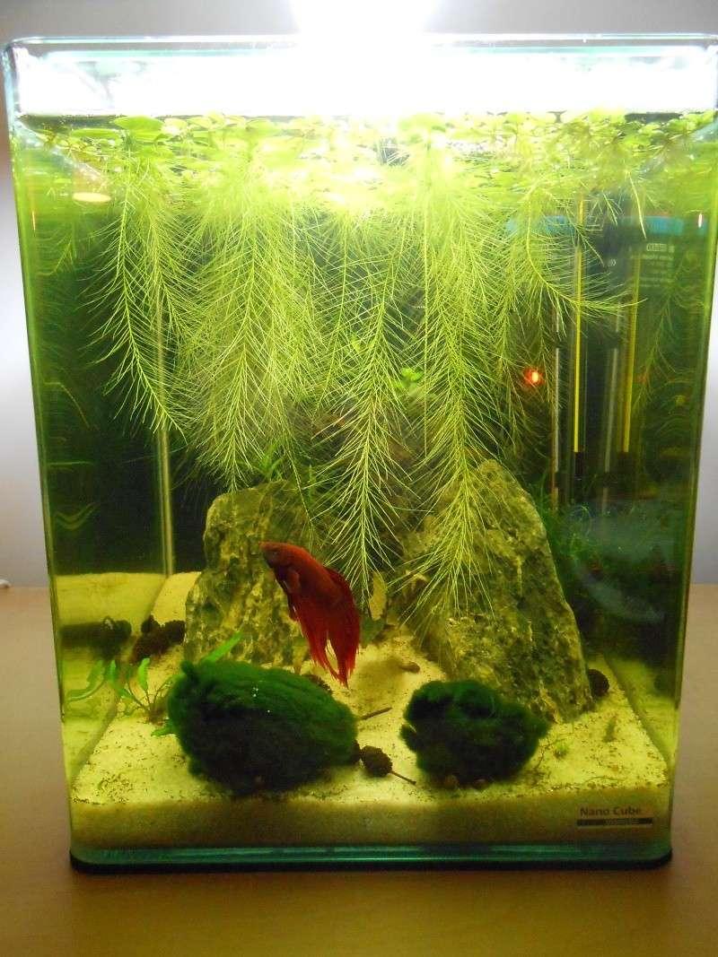 View topic nano cube 20 litres pour un betta - Comment fabriquer un aquarium ...