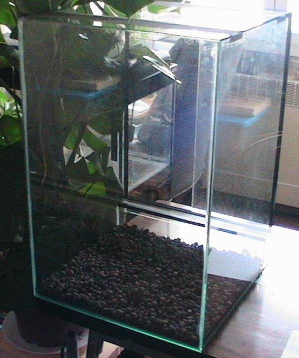 en cours terrarium tropical arboricole pour. Black Bedroom Furniture Sets. Home Design Ideas