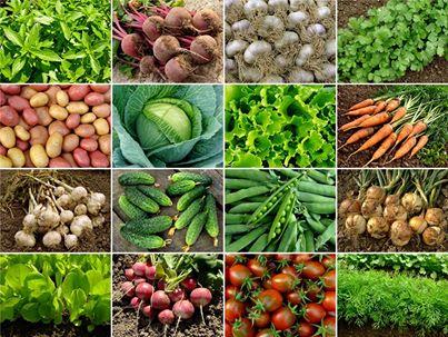 النباتات والاعشاب الطبية والعلاج بها