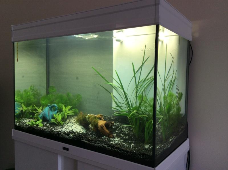 Lancement 128 l aquatlantis for Jardiland aquarium