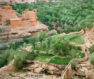 amazigh by mimouni